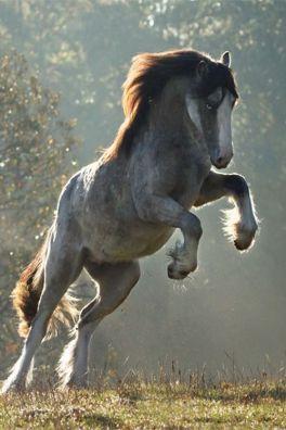 horse_art2